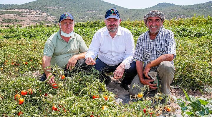Yerli ve milli sebze çeşitleri Çukurköy'de tanıtıldı